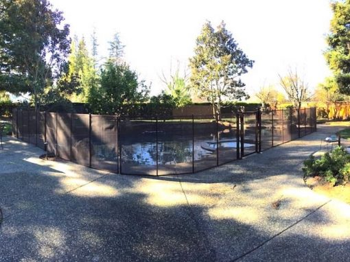 San Ramon Pool Fence